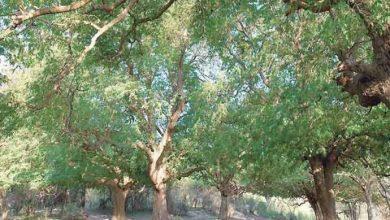 Photo of مزارات سياحية رائعة في سلطنة عمان