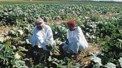 Photo of الزراعة بدون تربة للتخلص من مشكلة الملوحة