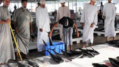 Photo of عُمان الأولى خليجياً في إنتاج الأسماك والأسطول التجاري يركز على القاعية