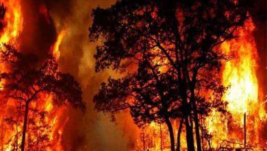 Photo of حرائق الغابات في أستراليا تصل الى ضواحي سيدني