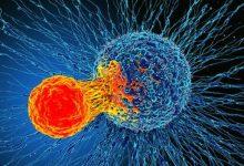 Photo of اكتشاف ثوري «يُشفي كل أنواع السرطان»