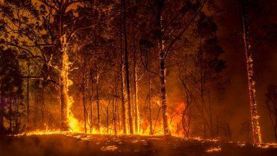 Photo of حرائق غابات في استراليا تأتي على 71 منزلاً قرب بيرث الخاضعة لإغلاق