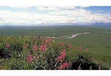 Photo of واشنطن تعلّق عمليات التنقيب عن النفط في محمية طبيعية بآلاسكا