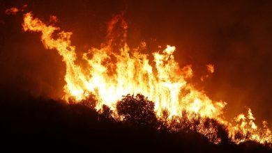 Photo of مصرع أربعة وإصابة ثلاثة في حرائق غابات بالجزائر
